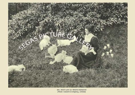 Fine art print of the Mrs. PETIT with her WHITE PERSIANS (Photo: Cassell & Company, Limited) by Frances Simpson (1903)